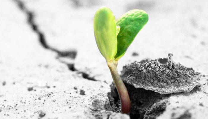 Rebondir après la crise avec la résilience appréciative